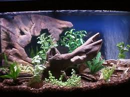 Aquarium Decor Ideas Best Freshwater Aquarium Design Ideas Contemporary Decorating