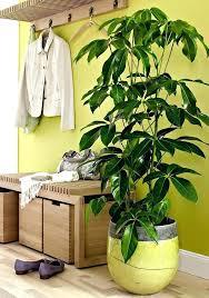 indoor plants that don t need sunlight indoor plant that does not need sunlight indoor plants without