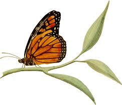clipart monarch butterfly 2