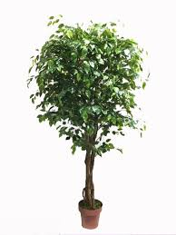 plastic live ficus tree small mini artificial ficus trees