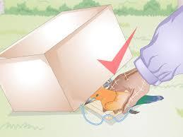 how to make a bird trap with pictures wikihow