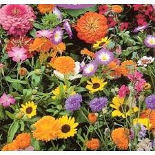 amazon com seeds and things wildflower seed mixture for