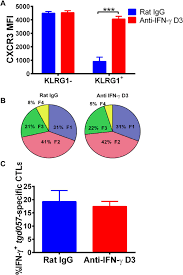an extrafollicular pathway for the generation of effector cd8 t