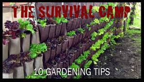 gardening tips 10 gardening tips youtube