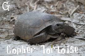 Tortoise Meme - a b see photo meme mindful ramblings
