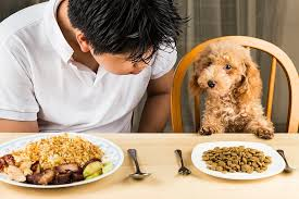 dogs at dinner table safety tips for feeding dogs human food pet care facts