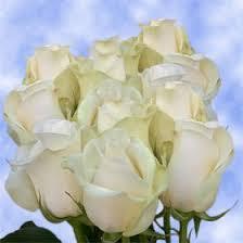 global roses real ivory roses in bulk best big roses sale send flower roses