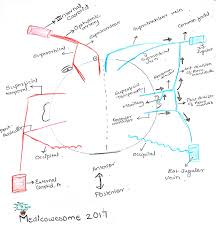 Nerve Map Medicowesome Blood Supply And Nerve Supply Of The Scalp