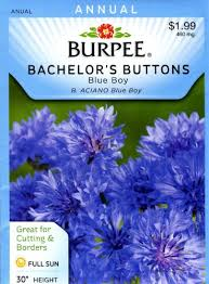 bachelor buttons burpee 40742 bachelor s buttons blue boy seed packet