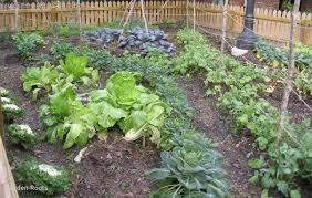 home vegetable garden tips india unique home vegetable garden