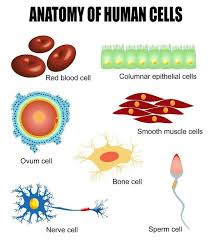 214 best learning about cells images on pinterest cell biology