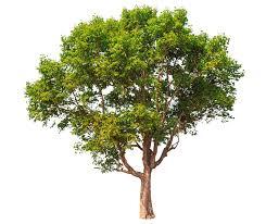 geschenkbaum forestfinance