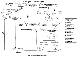 The Light Reactions Of Photosynthesis Use And Produce The Process Of Photosynthesis In Plants With Diagram