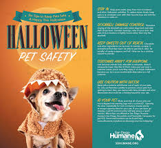 preventing halloween spooks for your pets san diego humane society