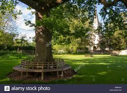 Circular Bench Around Tree A Circular Bench Around An Oak Tree On A Village Green Stock Photo