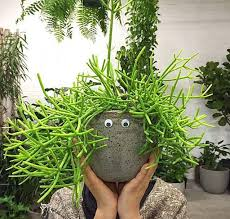 australian native indoor plants instagram accounts that u0027ll inspire the plant enthusiast within