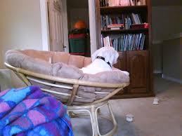 folding papasan chair apartment therapy u2014 nealasher chair the