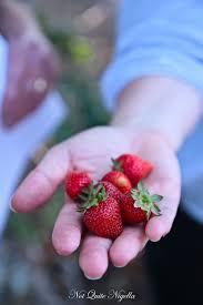 food in berry nsw not quite nigella