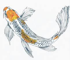 drawn koi fish sharpie pencil and in color drawn koi fish sharpie