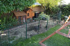 sunny simple life the new chicken fence