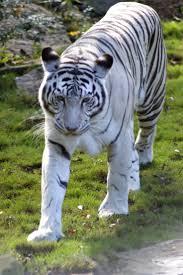 261 best danika u0027s zoo animals images on pinterest zoo animals