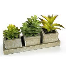 Amazon Succulents Amazon Com Set Of 3 Realistic Artificial Succulent Plants W