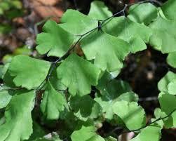 native plants to new zealand waimea valley