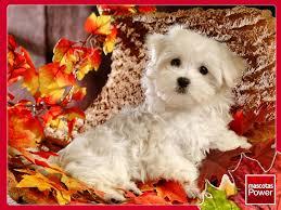 imagenes de otoño para fondo de escritorio wallpapers otoño mascotas power