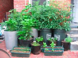 78 best container gardening images on pinterest vegetable garden