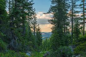 California forest images Northern california beautiful siskiyou county google search jpg