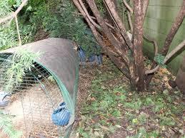 major us study on backyard flocks mikethechickenvet