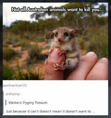Australian Memes - not all australian animals want to kill you funny memes daily