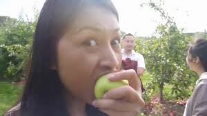 apple picking at connors farm youtube
