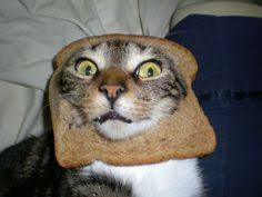 Cat In Bread Meme - 18 best cat in bread images on pinterest bread breads and