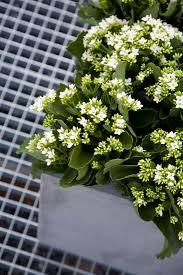 topfpflanzen balkon kalanchoe blumenbüro newsroom