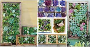 amazing living succulent frames to add life to your dull walls