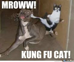 Kung Fu Meme - kung fu cat by harrysmemes meme center