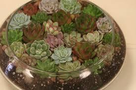 see bella u0027s plant designs bella calla