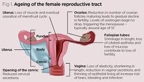 anatomy and physiology of ageing 8 the reproductive system