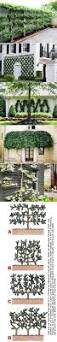 12 best gardening images on pinterest espalier fruit trees