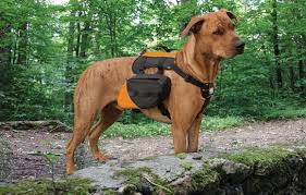 top trail running gear for dogs active