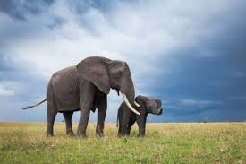 cute elephants wallpapers