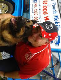 aussie pooch mobile dog wash u0026 grooming franchise ph 1300 369 369