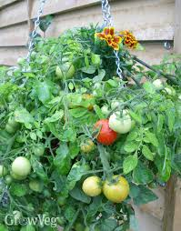 fruit and vegetable basket how to grow vegetables and fruit in hanging baskets