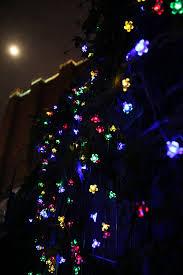 amazon com all star 50 led solar powered flower bulbs outdoor