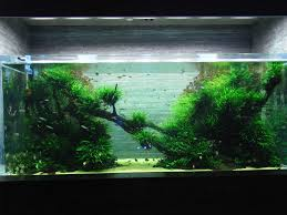 Japanese Aquascape by The Passing Of Aquascaping Legend Takashi Amano