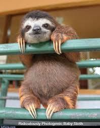 Sloth Meme Maker - sloth meme generator 28 images creepy sloth meme generator