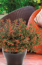 Heat Loving Plants by 556 Best Plants For Central Texas Images On Pinterest Flower