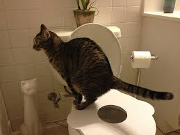 Animal Toilet Paper Holder by Amazon Com Cat Toilet Training Kit Seat By Kitty U0027s Loo The Best