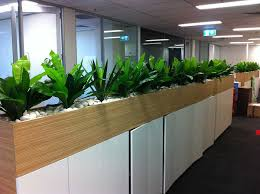 office plant office plants birds nest and yuccas with white stones